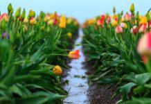 Холод, дожди и перепады температур: синоптики рассказали, сколько продлится майская непогода - today.ua